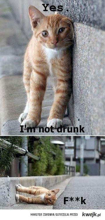 pijany kot