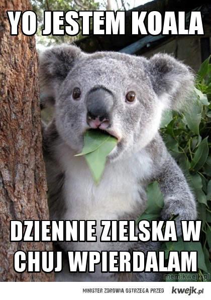 Yo jestem koala