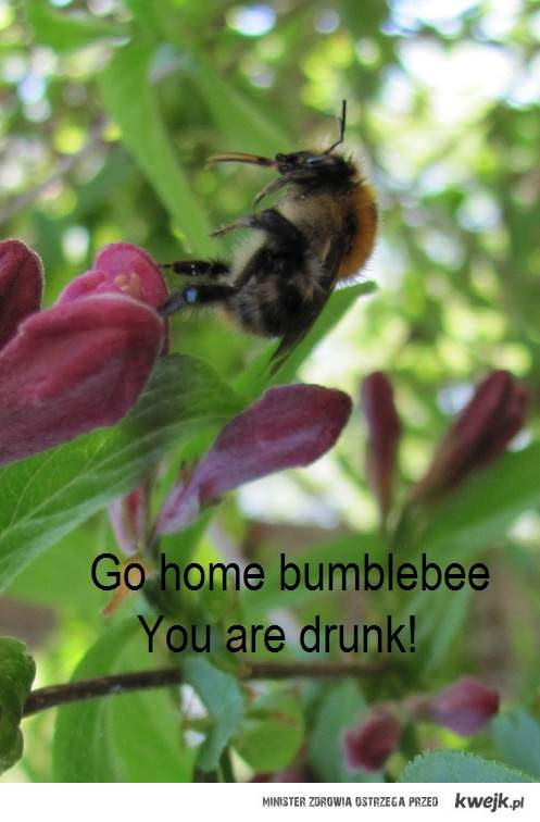 Go home bumblebee, you are drunk.