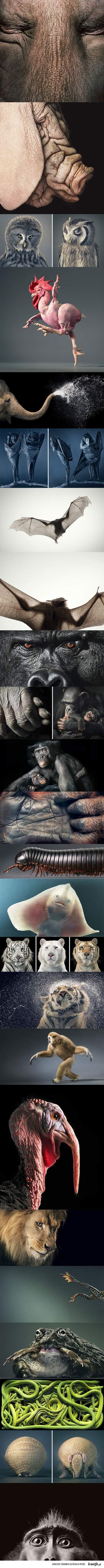 Zwierzęta z uczuciami