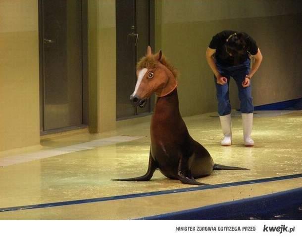 Skąd oni wszyscy biorą te maski koni?