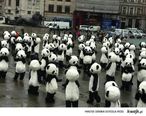 PANDAS in london *u*