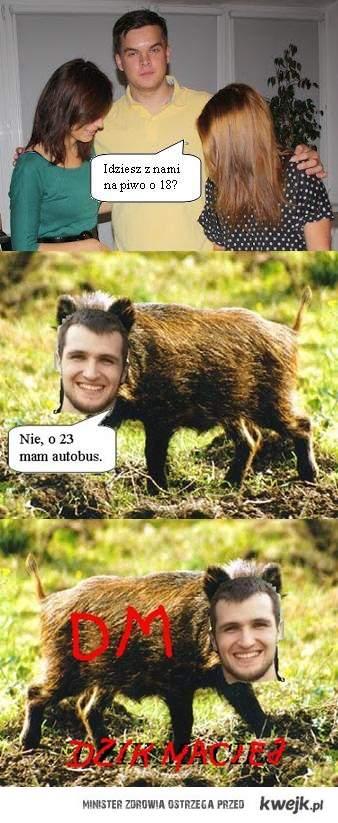 Dzik Maciek