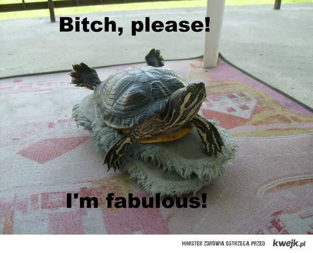 Żółwik :D