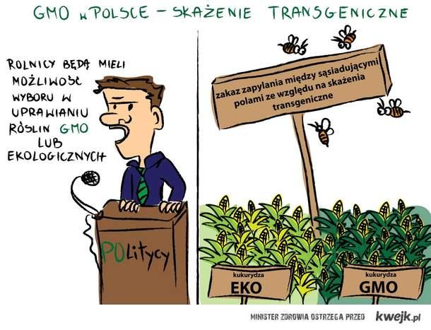 8 listopada rząd wcisną Polakom ustawę dopuszczającą uprawę i sprzedaż żywności GMO w Polsce!