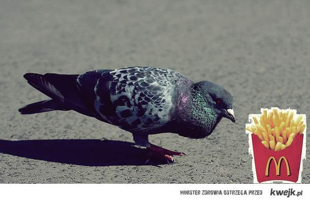 golebie pozdrawiaja
