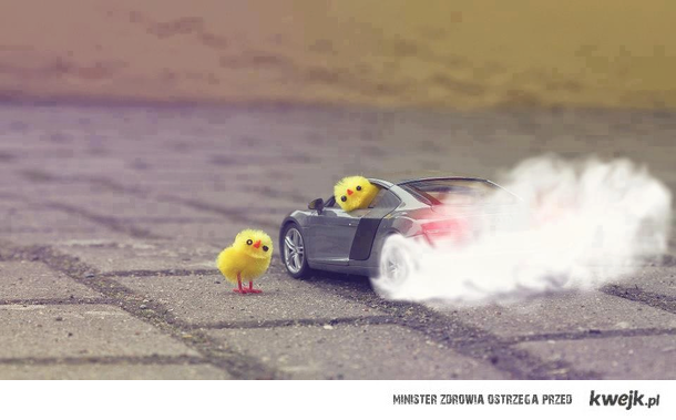 burnout chicks