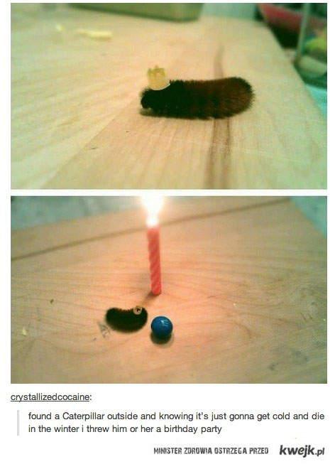 urodziny gąsienicy