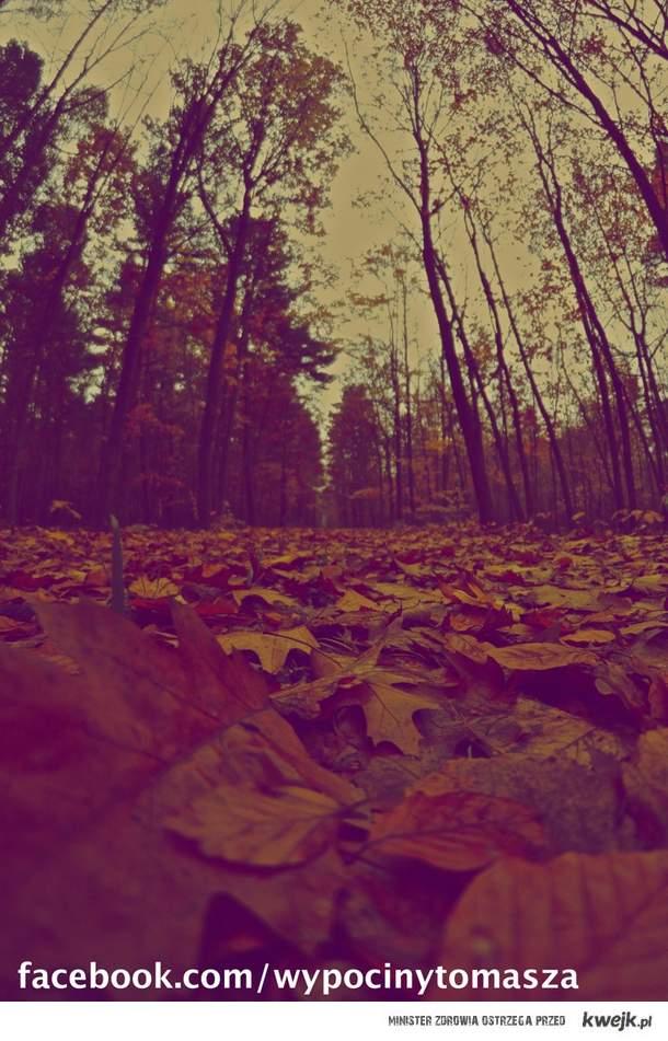 Piękna polska jesień *_*