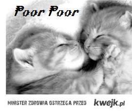 poor poor :3
