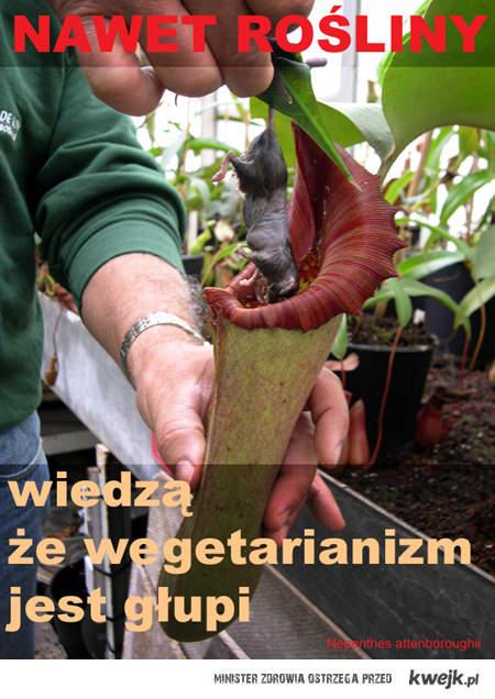 Nawet rośliny wiedzą że wegetarianizm jest głupi