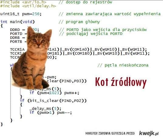 Kot źródłowy