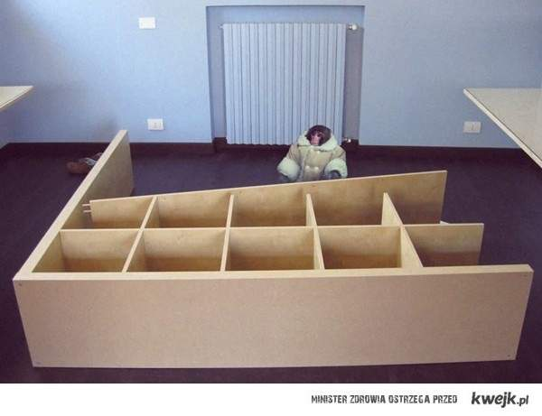 Składając meble z Ikei czuję się jak Lucynka