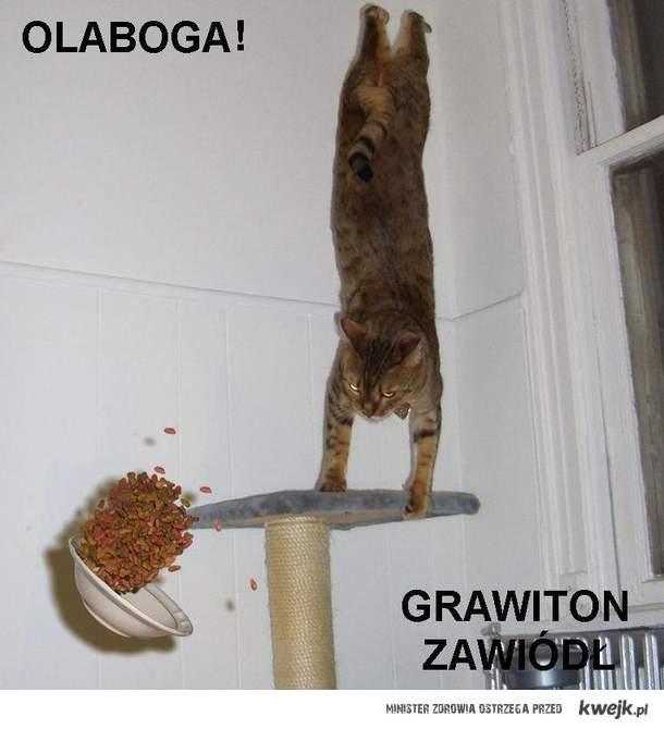 bezgrawitacyjny kot