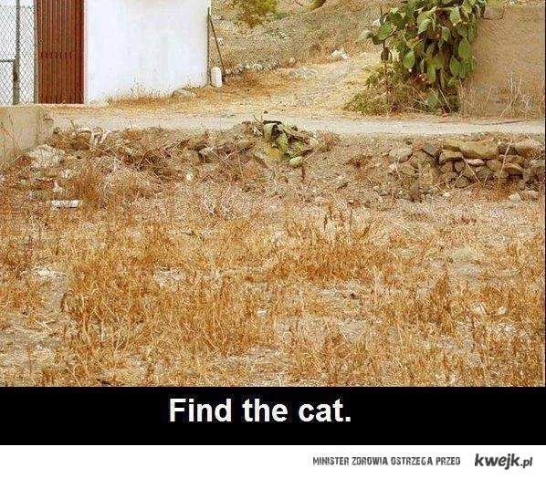 (na tym zdjęciu nie ma kota)