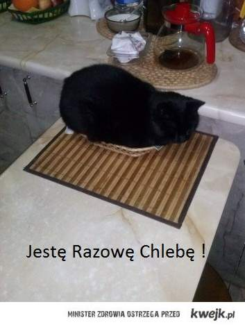 Kot Chleb