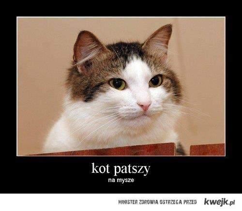 Kot patszy