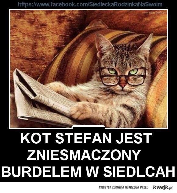 Kot Stefan