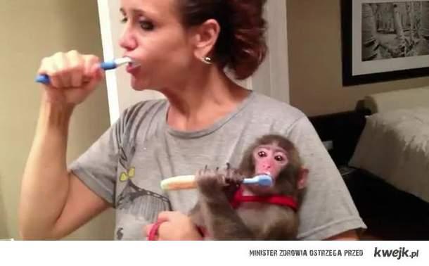 lucynka myje zeby