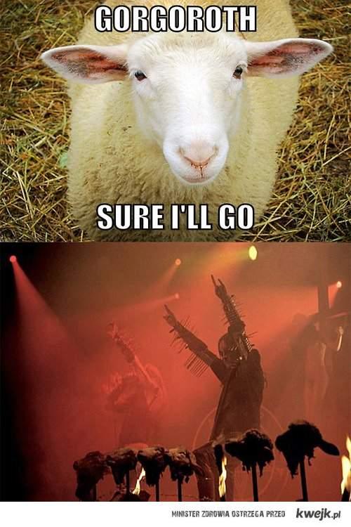 Biedna owca