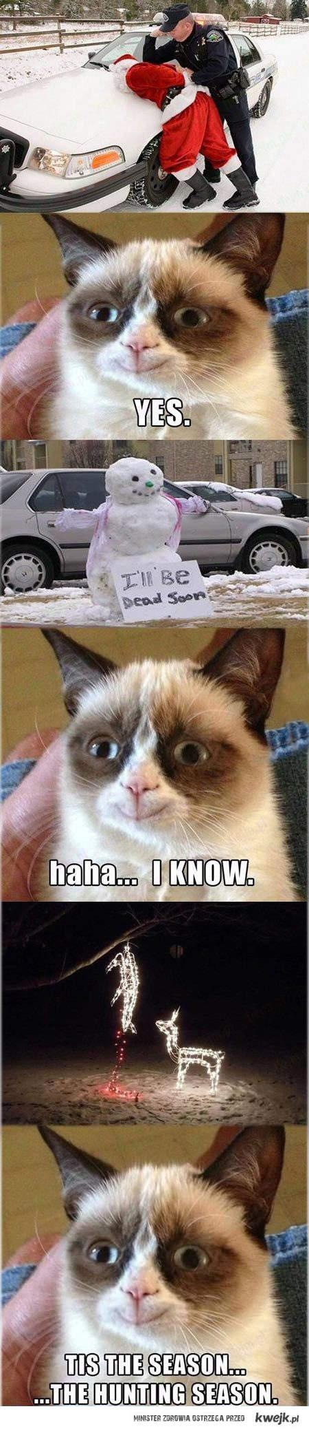 Zadowolony Grumpy Cat