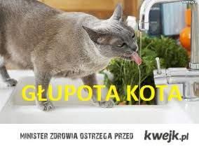 Głupota kota