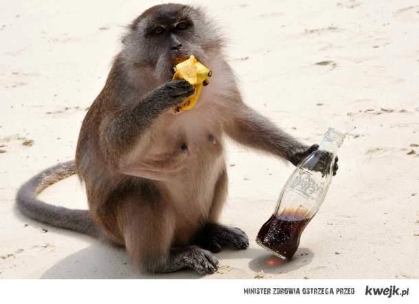 tajska małpka
