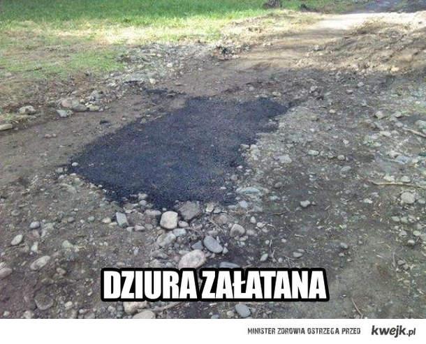 polskie dogi
