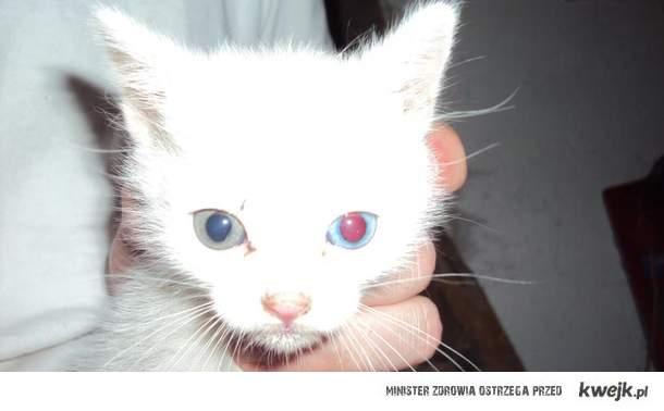 rzeszowian kitty