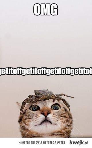 getitoffgetitoffgetitoff