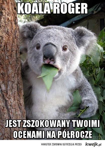 koala roger