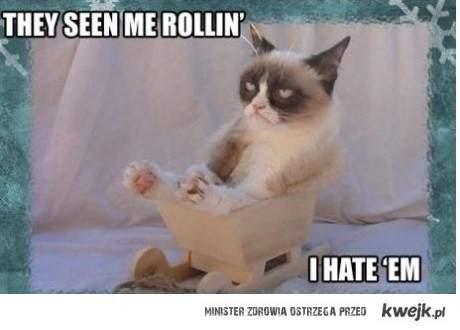 grumpy kot