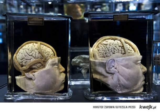głowy z muzeum w Amsterdamie