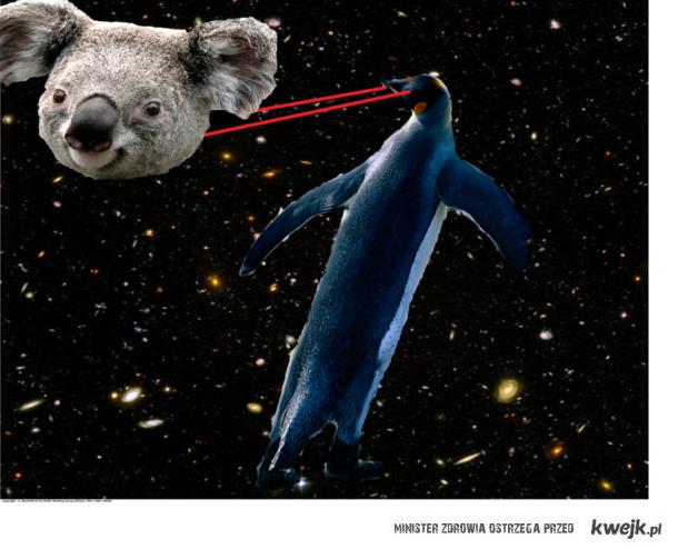 mega pingwin przemierzający kosmos, walczący z głową koali