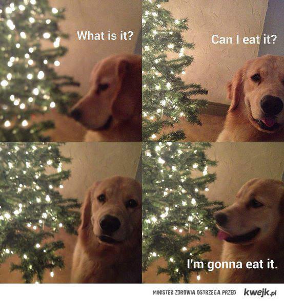 Zjem!