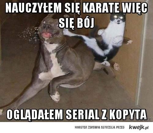 Nauczyłem się karate więc się bój