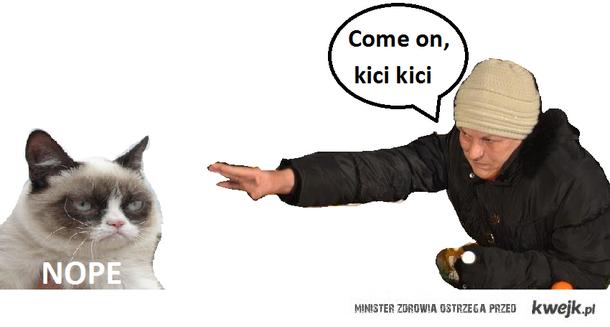 Cat i pani internetu