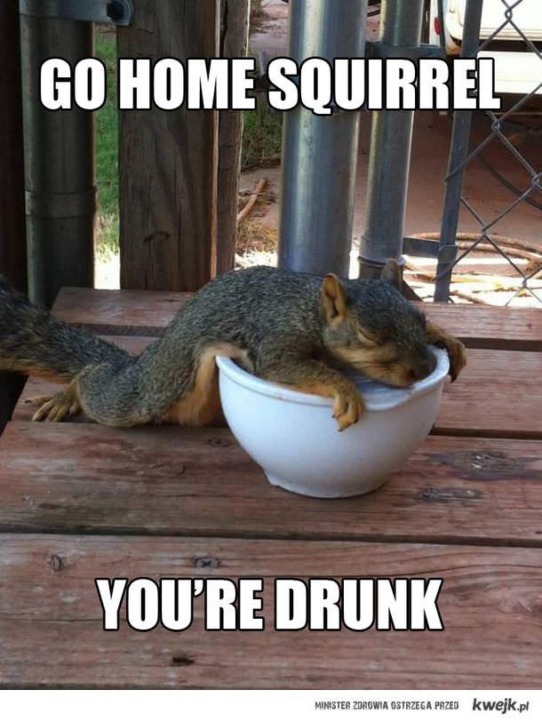 Pijana wiewiórka