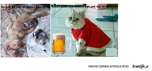 kot próbuje piwo a drugi napił się za dużo