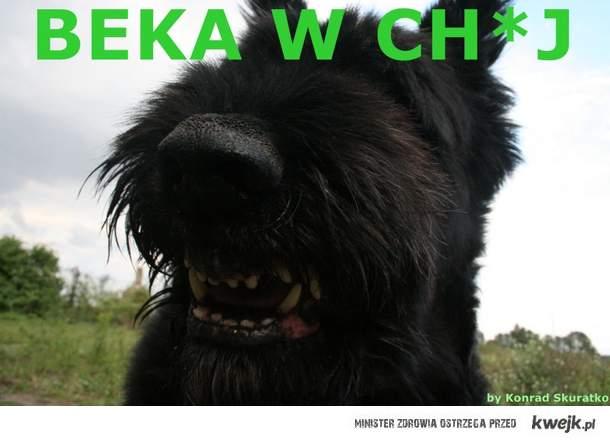 BEKA W CH*J