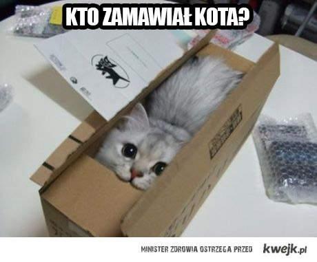 kto zamawiał kota