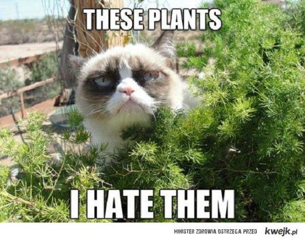 i hate plants