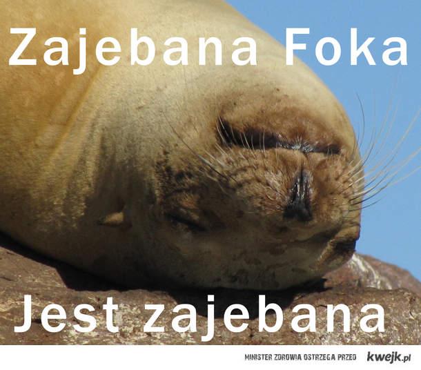 Zajebana Foka