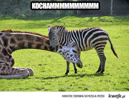 kochammmm