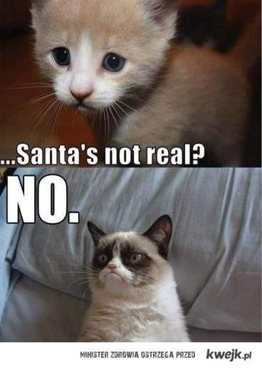smutny kot jest smutny