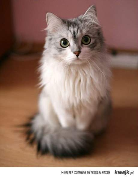 Fotogeniczny kotek