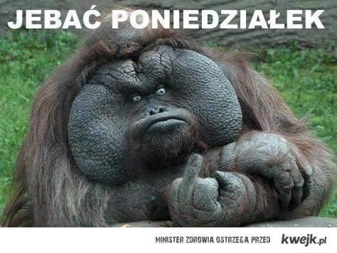 Nawet małpa to wie