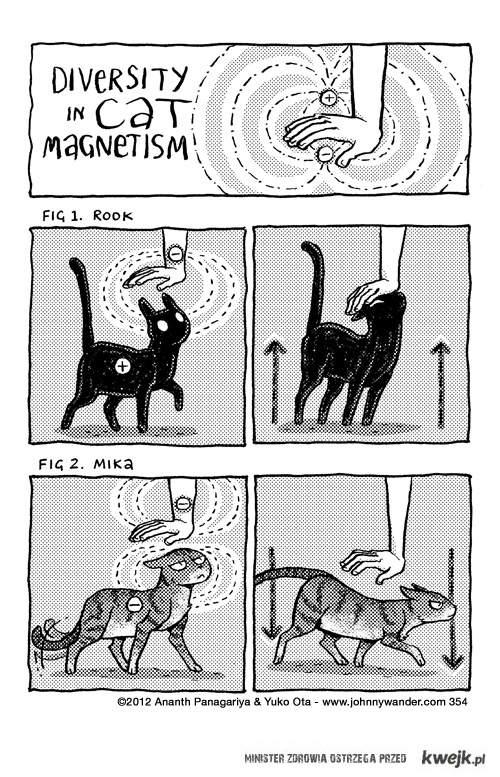 Magnetyzm kotów