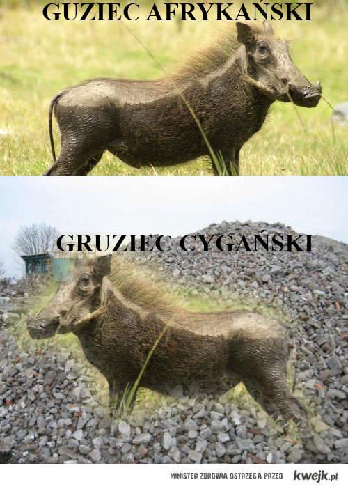 Gruziec