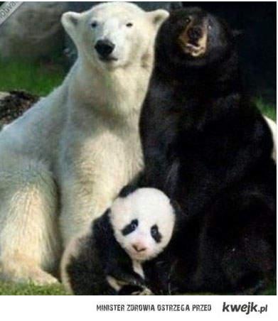 jak powstaja pandy